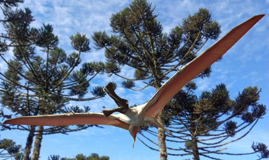 Окаменелость гигантской летающей рептилии обнаружена в Австралии