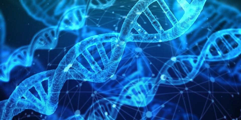 ДНК геном