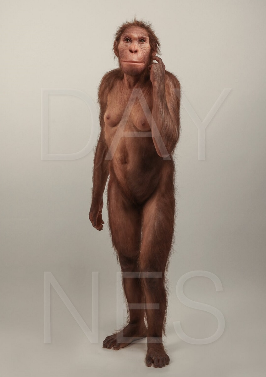 Реконструкция Australopithecus sediba