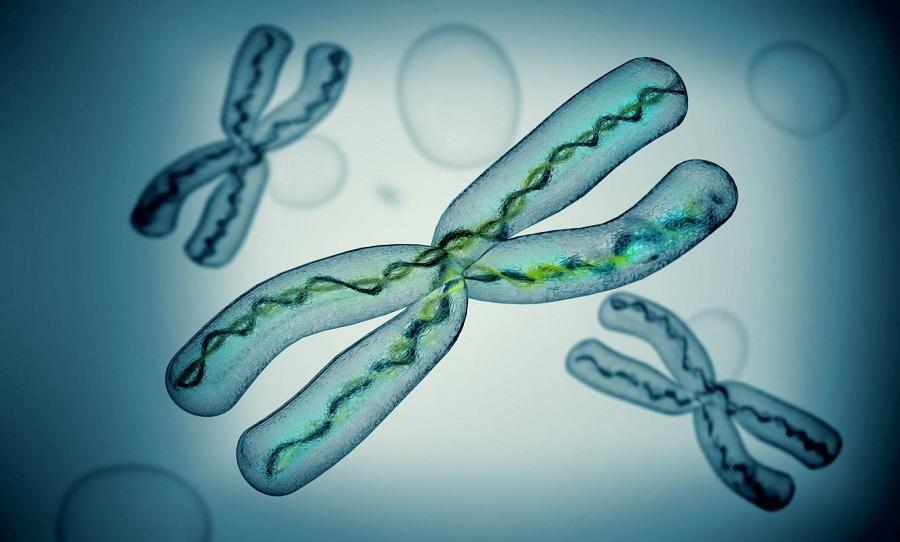 Человеческая Х хромосом