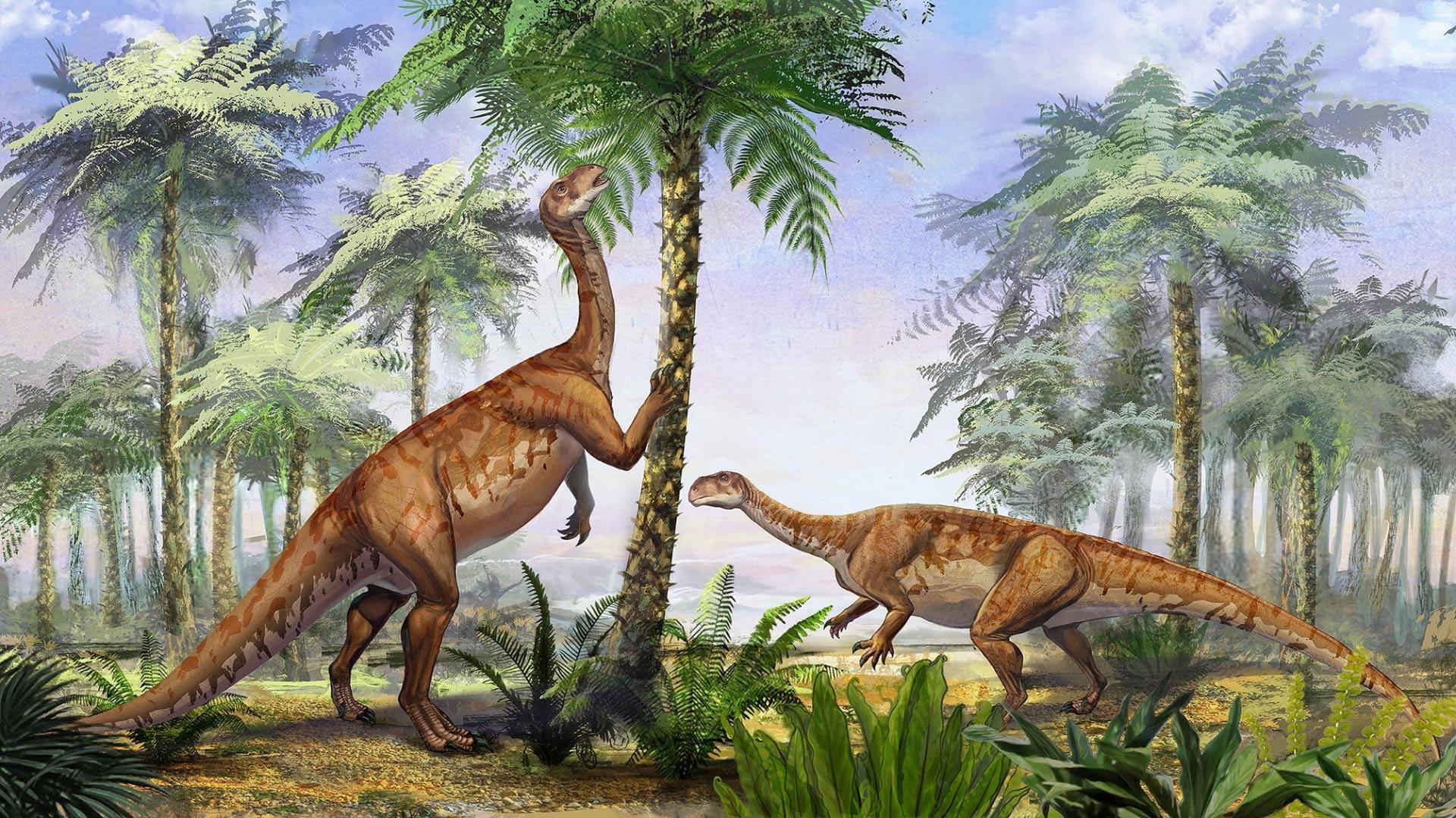 Irisosaurus yimenensis