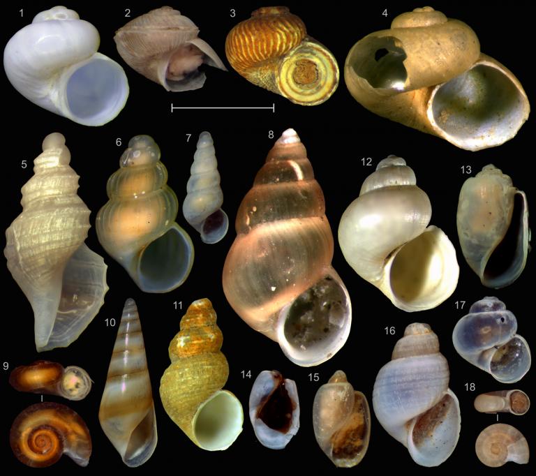 микромоллюски