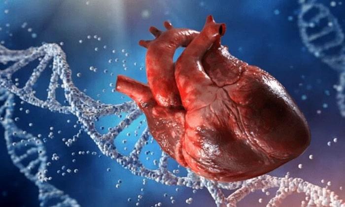 сердце днк гены