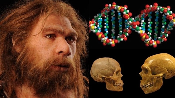 неандерталец днк
