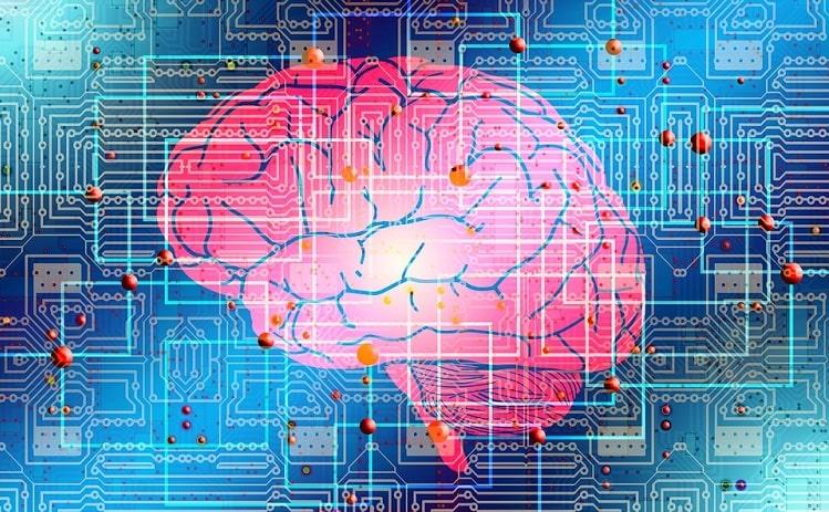 мозг эволюция