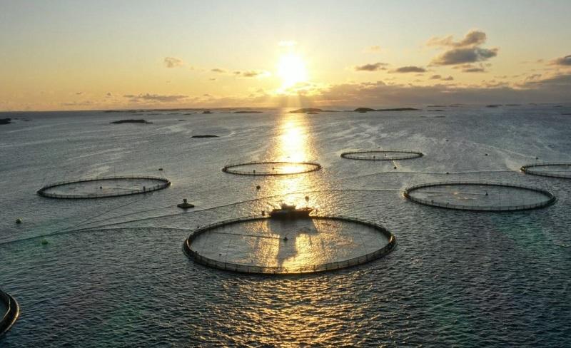 Искусственный интеллект помогает кормить лосось более эффективно