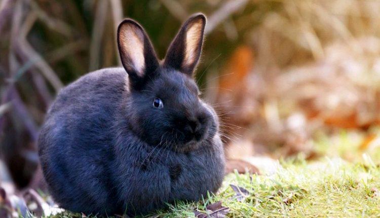 Ученые нашли причину, по которой кролики не вырастают большими