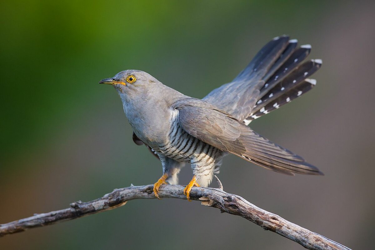 Перелетные птицы: названия, фото и описание перелетных видов птиц