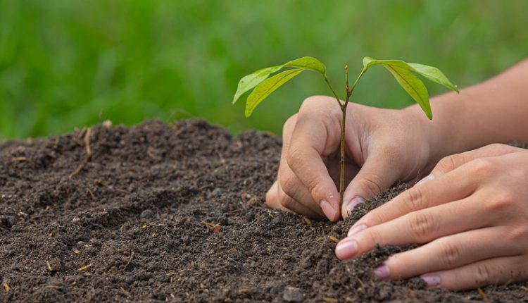 Компания AB InBev Efes представила результаты проектов в области устойчивого развития