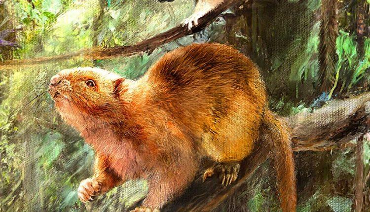 Палеонтологи нашли окаменелости вымерших гигантских облачных крыс на Филиппинах