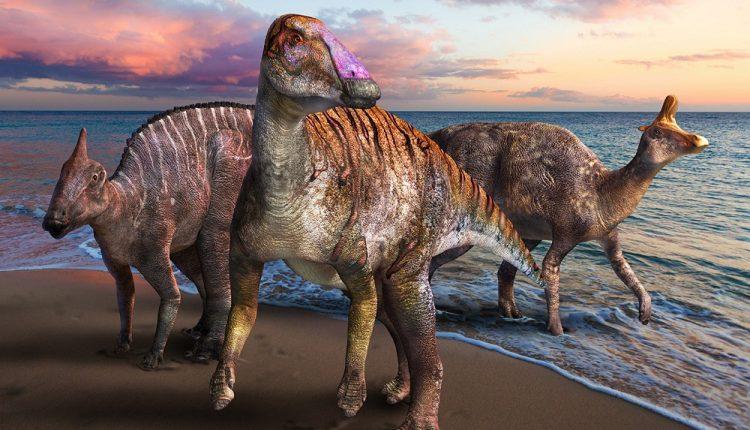 Yamatosaurus izanagii бродил по нашей планете 71,8 миллиона лет назад в позднемеловую эпоху.