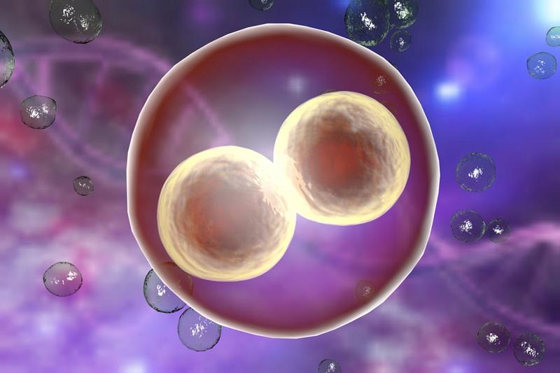первая клетка
