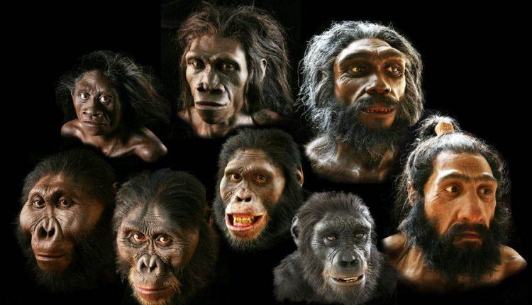 Гоминины: ископаемые обезьяны и загадка эволюции человека