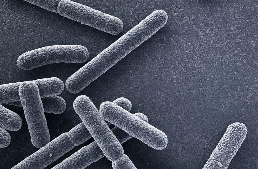 Молекула кардиолипин играет жизненно важную роль в обоих грамотрицательных защитных механизмах бактерий