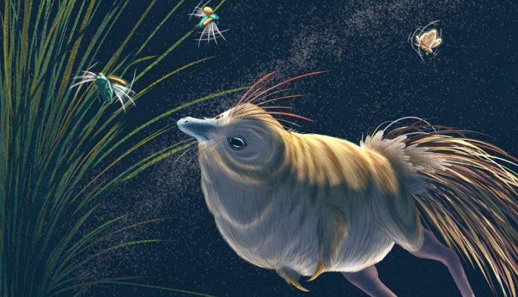 Shuvuuia deserti - динозавр, живущий в пустыне, обладал острым зрением и слухом