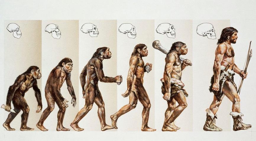 современные теории происхождения человека