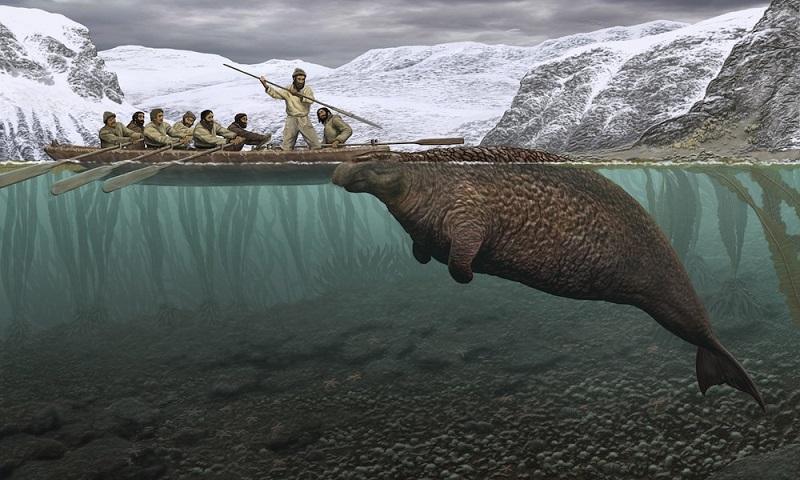 Морская корова Стеллера