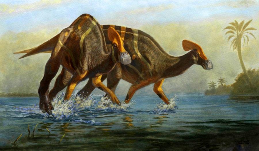 гадрозавр Tlatolophus galorum