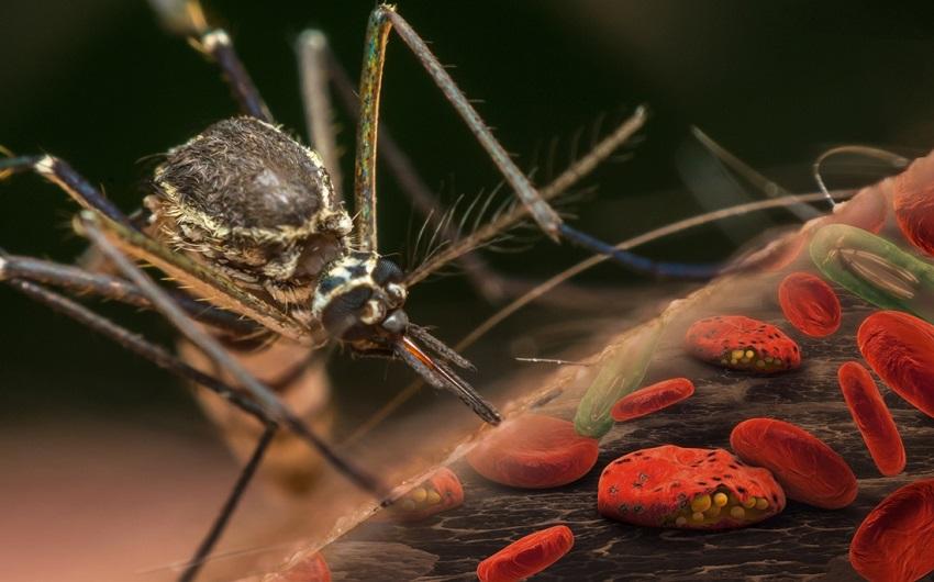 Вакцина от малярии