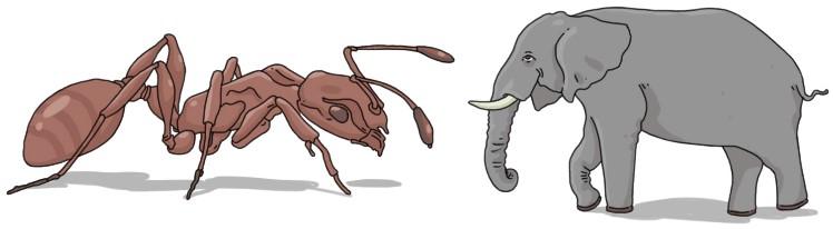 сравнение размеров муравья и слона