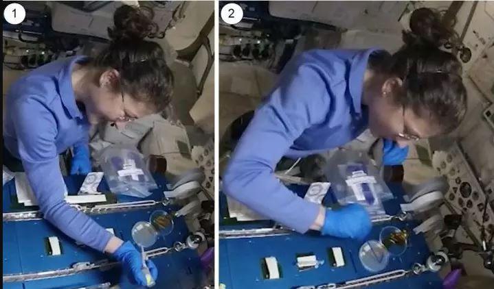 CRISPR в космосе