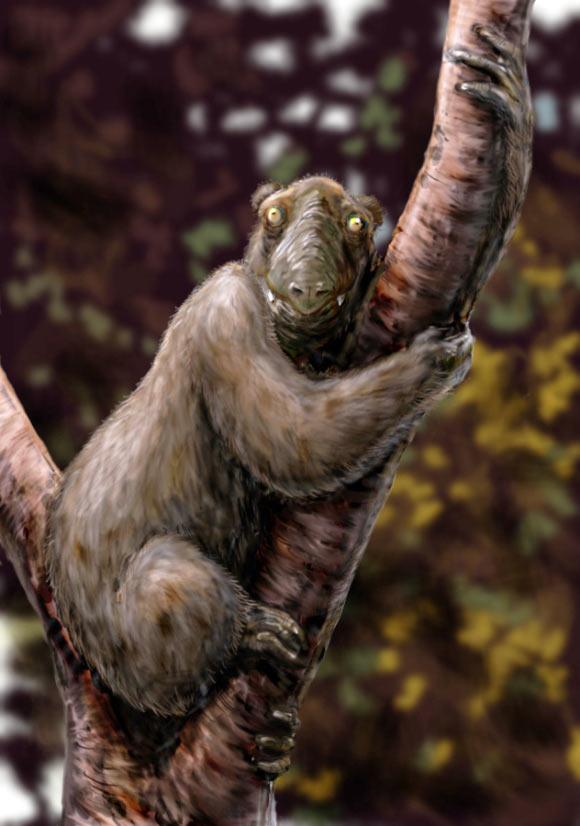 Megaladapis edwardsi