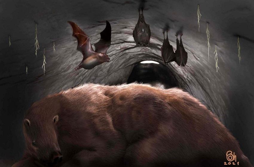 Desmodus draculae в норе гигантского ленивца