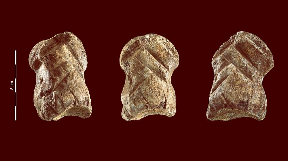 кость гигантского оленя