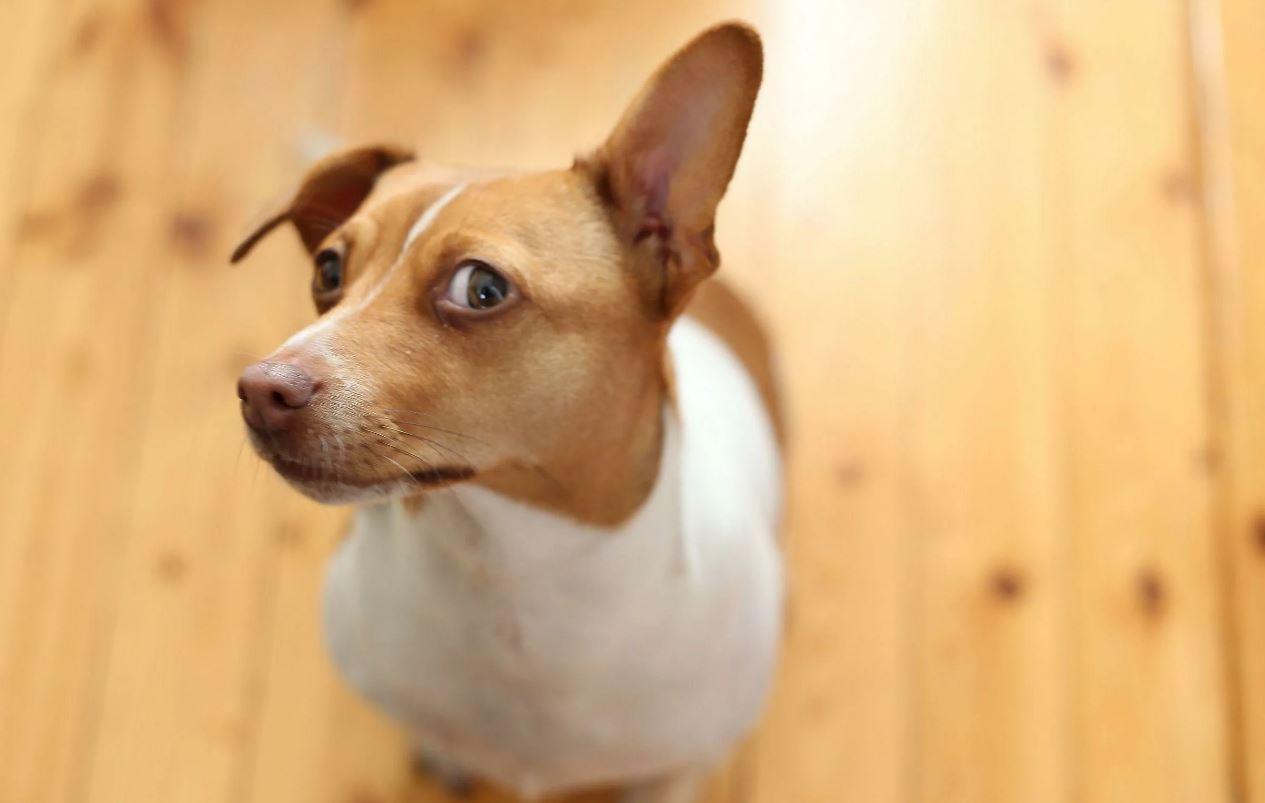 собаки и ложь