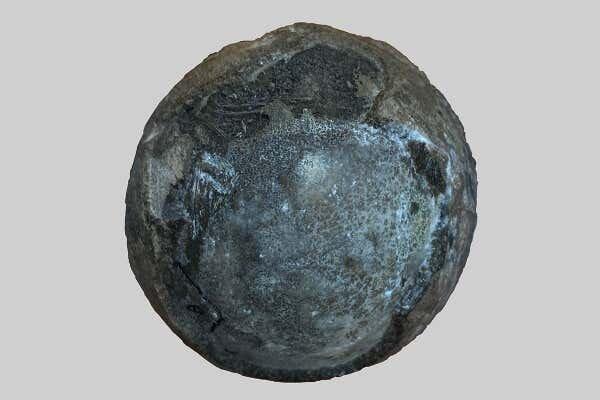 Яйцо черепахи Nanhsiungchelyid, содержащее эмбрион. Предоставлено: Yuzheng Ke.