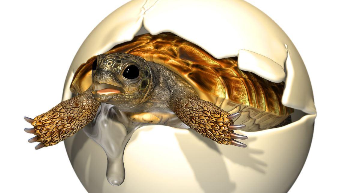 Яйца динозавров или черепах мелового периода находят крайне редко