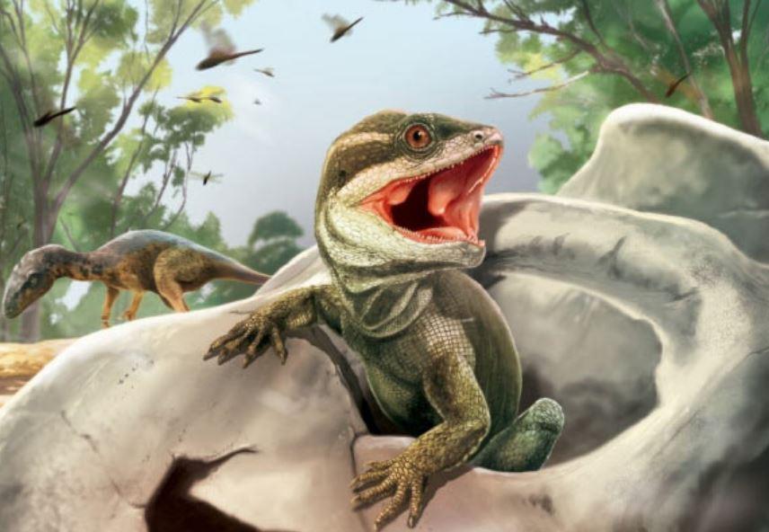 Палеонтологи нашли окаменелость рептилии, похожей на туатару, возрастом 231 миллион лет