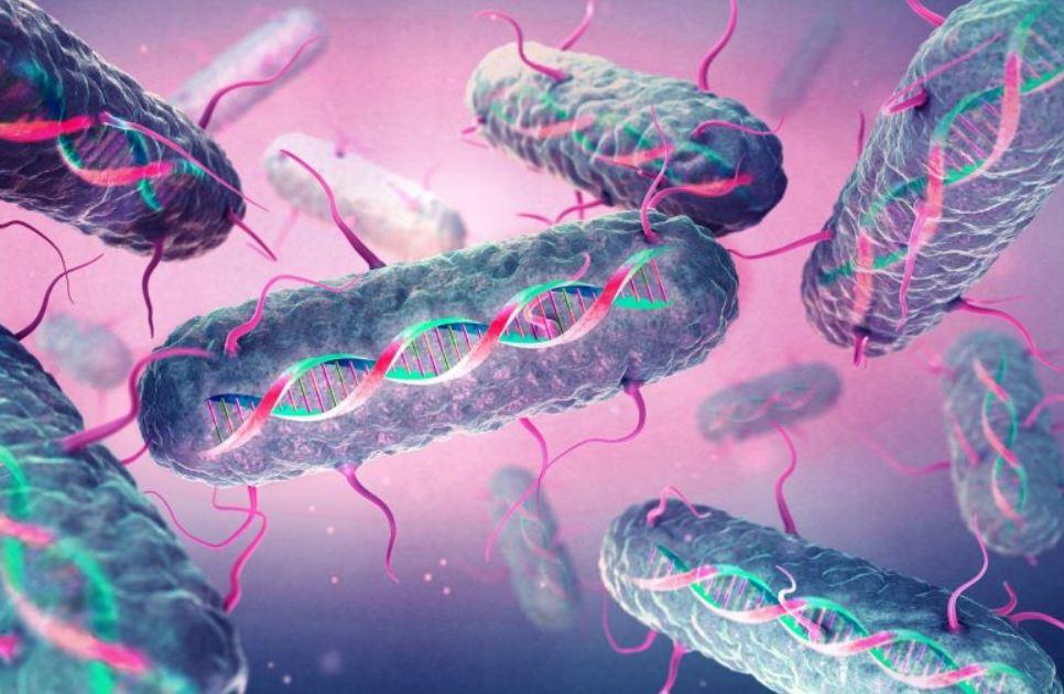 днк бактерий