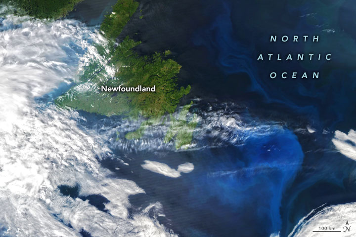 Цветения фитопланктона в Лабрадорском море