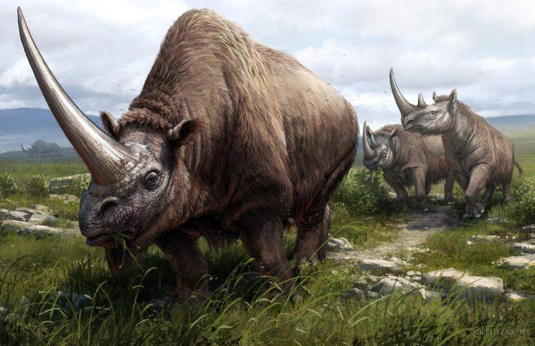 Реконструкция вымерших носорогов