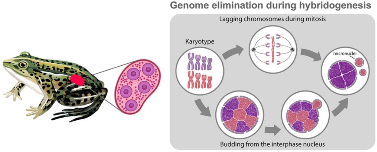 Биологи СПбГУ систематизировали все известные случаи удаления генетического материала