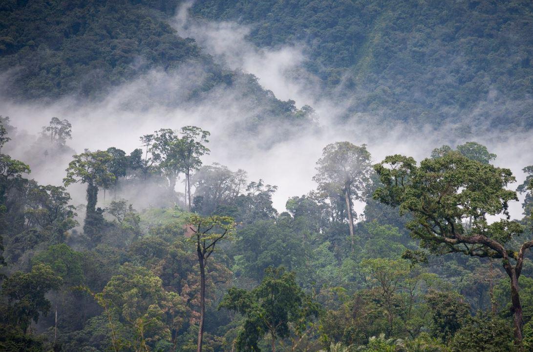 Тропические леса в горах Африки накапливают больше углерода, чем предполагалось