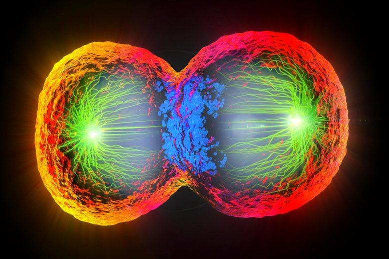 Происхождение жизни: первые клетки могли использовать температуру для разделения