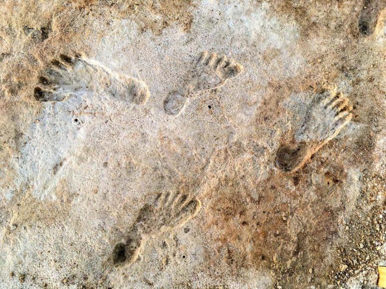 Древние следы свидетельствуют о человеческой деятельности в Америке на тысячи лет раньше, чем предполагалось