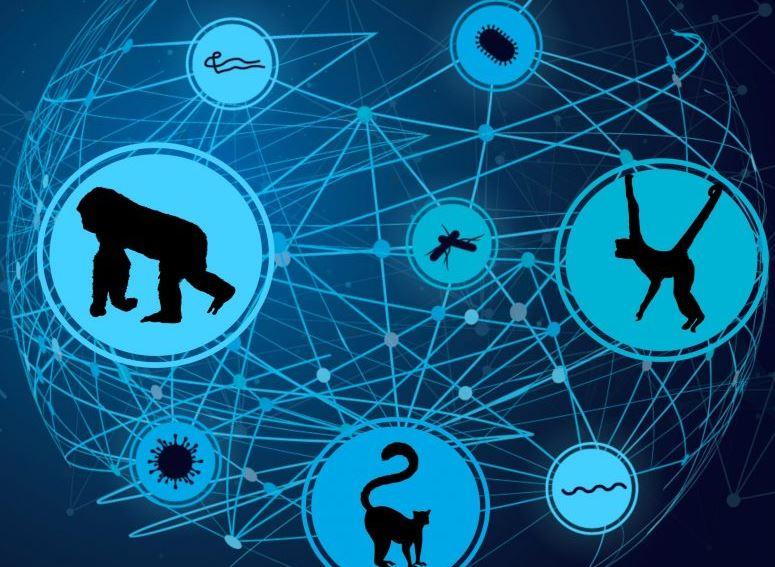 Если исчезнут приматы, находящиеся под угрозой исчезновения, исчезнут и их паразиты - и это проблема