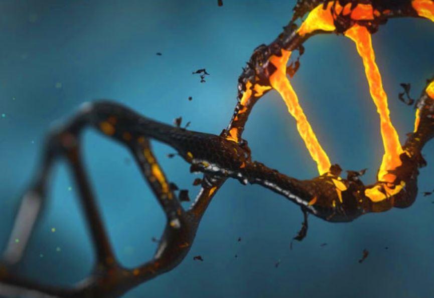 Что делает человеческий мозг уникальным - мусорная ДНК?