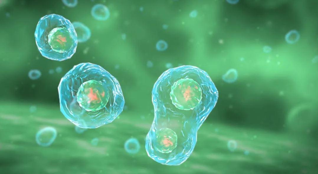 Антивозрастной препарат действует как «умная бомба», уничтожая дисфункциональные клетки