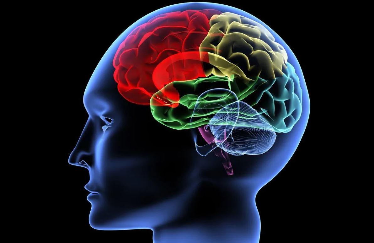 На сколько процентов работает мозг у человека?