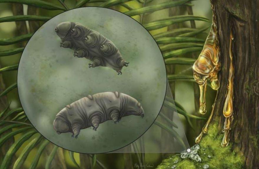 Художественная реконструкция Paradoryphoribius chronocaribbeus